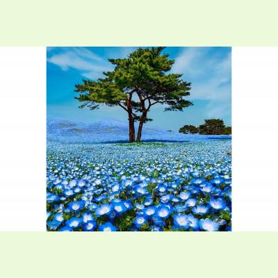 Синее поле
