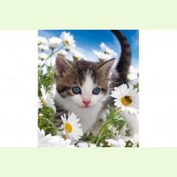 Котенок среди ромашек