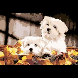 Болонки в листьях