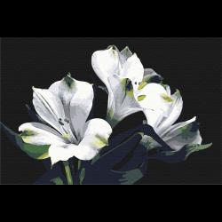 Белая Альстромерия
