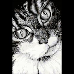 Картина по номерам - Задумчивый кот