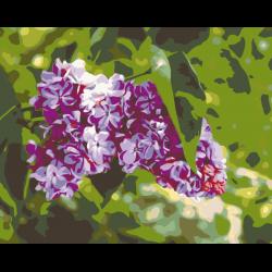 Картина по номерам, 40 x 50, ANNA-Betya004