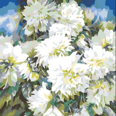 Картина по номерам - Белые Хризантемы
