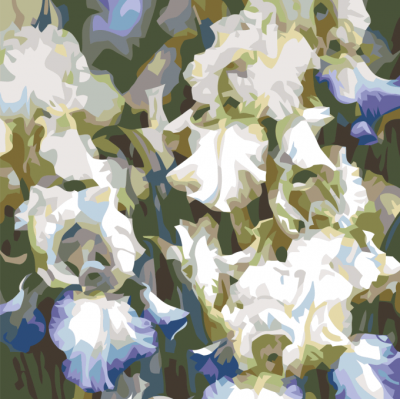 Картина по номерам - Бело-голубые Ирисы
