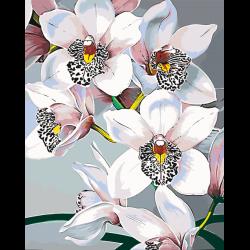 Кремовые орхидеи