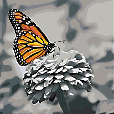 Бабочка Монарх