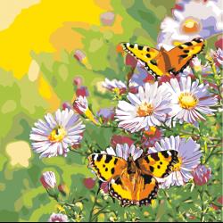 Картина по номерам - Бабочки на летнем лугу
